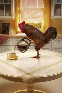 Instead of making all the racket by roosting, I thought I should make you cup of coffee, and the smell of it would just make you want to get up.