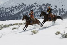 winter cowboy | Cowgirl and cowboy riding horses in winter - 42-29184498 - Rights ...