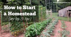 How to start a homestead.  Good easy tips here!  slow and steady and make lots of mistakes