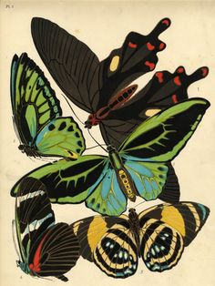 E.A. Seguy, Insects, and the Art of Pochoir