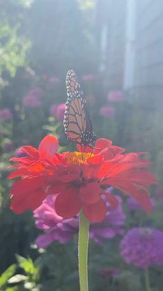 Wallpaper Nature Flowers, Beautiful Flowers Wallpapers, Flower Wallpaper, Beautiful Flowers Photos, Beautiful Butterflies, Butterfly On Flower, Monarch Butterfly, Nature Photography Flowers, Cool Illusions