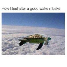 Cannabis, Medical Marijuana, 420 Memes, Vape Memes, Funny Memes, Drug Memes, Funny Facts, Herbs, Ganja