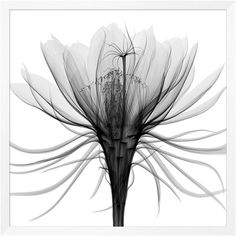 Transparent Floral Framed Print #2 (14.599.120 IDR) ❤ liked on Polyvore featuring home, home decor, wall art, photo wall art, home wall decor, white wall art and floral home decor