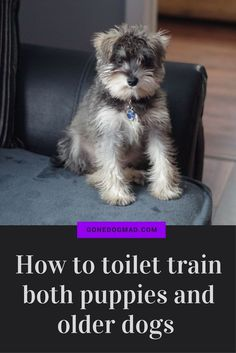 7 Steps to Potty Training your… #dogtrainingcourse