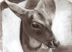 Drawing of a doe from the zoo.
