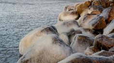 Niklas Falks Bilder, Sundom,Vasa m. Polar Bear, Animals, Animales, Animaux, Animais, Polar Bears, Animal