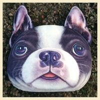 New Year Final Clear Out Personality Chair Pillow Case Car Cushion Cover Creative Handsome Dog Shape Nap Pillow Cover Cute Seat Cushion Five Types Boston Terriers, Cat Pillow, Plush Pillow, Throw Pillow, Cute Cat Face, Cat Cushion, Cushion Pillow, Decorative Pillow Cases, Cartoon Dog