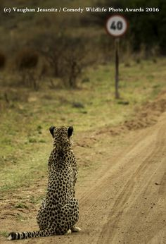 As imagens mais cómicas da vida selvagem