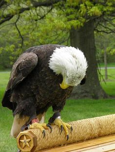 And the Eagle bowed his head and wept for the Fallen The Eagles, Bald Eagles, Pray For America, God Bless America, Eagle Pictures, Bird Pictures, My Champion, All Gods Creatures, Birds Of Prey