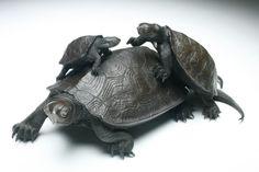 Meiji turtles