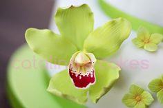 Orquídeas paso a paso