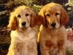 Awwwww! Boy and girl twins!