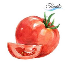 Illustration of Watercolor vegetables tomato isolated on white background vector art, clipart and stock vectors. Watercolor Fruit, Fruit Painting, Watercolor Cards, Watercolor Background, Watercolor Flowers, Watercolor Paintings, Watercolour, Tomato Drawing, Vegetable Painting