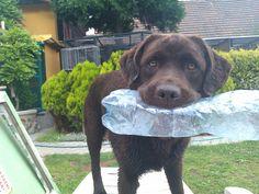 Jenny choco labrador with PET bottle