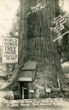 Lilly Redwood Park Tree House ~Redcrest, California (Humboldt County, 40 miles south of Eureka, CA)