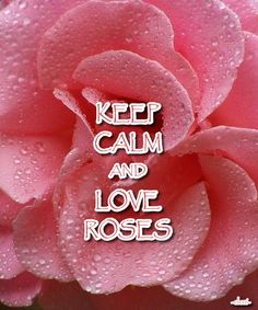 KEEP CALM AND LOVE ROSES - created by eleni