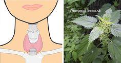 Trpíte na zníženú či zvýšenú činnosť štítnej žľazy, prípadne iné prejavy stým spojené? Na každý z týchto problémov existuje vhodná bylinka.