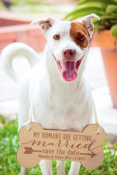Engagement Photography Ideas - Personalized Pet Sign for Engagement Save the Date and Wedding Pictures | Handmade Wedding Decor & Gifts at www.ZCreateDesign.com... or shop ZCreateDesign on Etsy