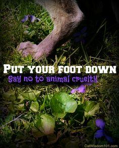 Merlin-cat- put foot down-say no animal cruelty