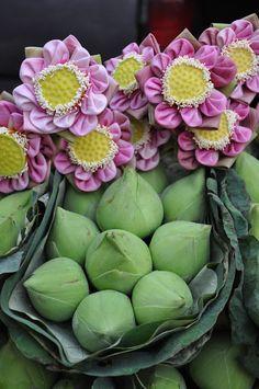 Lotusové květy, Thajsko / Lotus flowers, Thailand