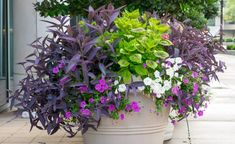 Container Gardening Ideas and Recipes for Spring and Summer flower pots and planters. This is the third post sharing container garden recipes, which includes specific plant names. Container Herb Garden, Diy Container Gardening, Plants, Container Gardening 101, Container Gardening, Garden Ideas Cheap, Container Gardening Flowers, Container Gardening Vegetables, Front Porch Flower Pots