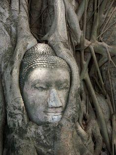 Buddha in a tree in Ayuthaya, Thailand