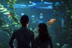 ripleys_aquarium_toronto_engagement_photography_4.jpg (1200×800)