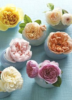 ~ david austin roses ~  My Mom and I each have a pale pink one in the back yard!  Gorgeous!  @Belly Buttons