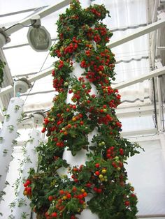 Aquaponics meets Tower Garden @ The Garden Building Rooftop Greenhouse in Orland. Vertical Hydroponics, Hydroponic Farming, Vertical Farming, Aquaponics System, Permaculture, Verticle Garden, Tower Garden, Diy Greenhouse, Garden Buildings