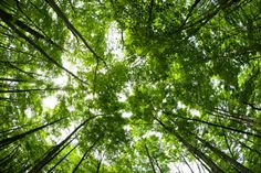 Items similar to Gatineau Parc Canopy Print on Etsy Canopy, Plants, Etsy, Plant, Planting, Canopies, Planets