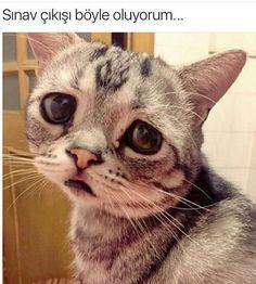 Sinavdan çıkınca böyle olan Arkadaşlarinizi Etiketleyin ���� #Adyu #mizah #caps http://turkrazzi.com/ipost/1520155785575822107/?code=BUYraICgHMb