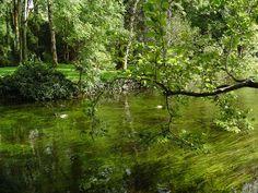 ...50 sfumature di verde! Ovviamente dall'Irlanda, #twitpic di Andy83
