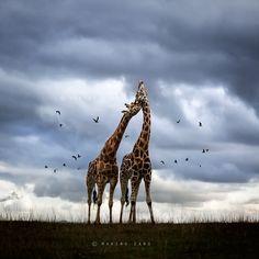 """""""Wildscape"""" by Marina Cano :)"""