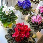 Rady od babky Archives - Page 6 of 28 - Recepty od babky Pesto, Floral Wreath, Wreaths, Plants, Decor, Floral Crown, Decoration, Door Wreaths, Deco Mesh Wreaths