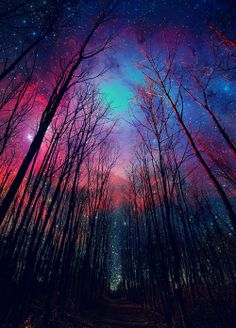 http://meriamber.tumblr.com/ outer space stars forest lights path pathway trees