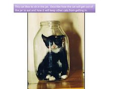 Cat in a jar??!! How did he get there?