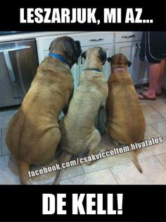 Funny animals with captions picture.funny animals ~ Funny images and Jokes Funny animals with captions picture.funny animals ~ Funny images and Jokes Humor Animal, Funny Animal Memes, Funny Animal Pictures, Funny Dogs, Funny Animals, Cute Animals, Funny Images, Dog Pictures, Animal Pics