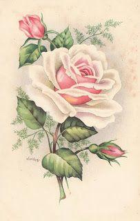 Vintage postcard #pink #roses