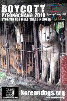 """Boycott Pyeongchang 2018 posters – Post and share everywhere! – Update on """"Boycott PyeongChang 2018 Winter Olympics in South Korea, A Dog Eating Nation! All Dogs, Dogs And Puppies, Doggies, South Korea News, Pyeongchang 2018 Winter Olympics, Stop Animal Cruelty, New Poster, Animal Welfare, Animal Rights"""