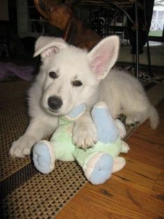 .this looks like Hugo when he was a puppy... except he had a polar bear as his stuffed animal lol