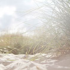 Buy beautiful and unique wall art. Prints and canvasses professionally produced from images of nature, architecture and anything beautiful which catches my eye.    Beach grass dunes print photo southwold beach coastal nautical decor wall art  living room bedroom hallway Straw House Art on Etsy