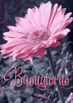 Ios Wallpapers, Wallpaper Backgrounds, Iphone Wallpaper, Italian Memes, Good Morning Flowers, Flowers For You, Halloween Backgrounds, Flower Wallpaper, Facebook