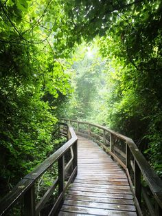 Heading out on a hike at Congaree National Park. Almost has a fairy tale quality to the lighting! #treasuredtravel