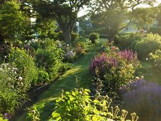 Perennial garden in late afternoon - contemporary - landscape - portland maine - Ann Kearsley Design