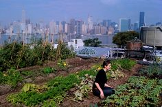 Sustainable urban farming ideas that think inside the box