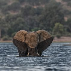 Half (Chris Fischer / Salem / USA) #Canon EOS-1D X #animals #photo #nature