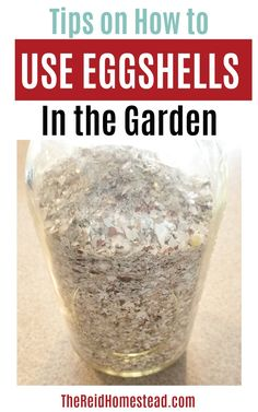 How to Use Eggshells in the Garden - How to Use Egg Shells in the Garden-Learn the different ways you can use your egg shells to benefit your garden plants! ~The Reid Homestead Veg Garden, Fruit Garden, Garden Pests, Edible Garden, Vegetable Gardening, Gardening For Beginners, Gardening Tips, Organic Gardening, Flower Gardening