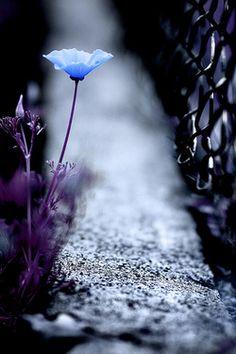 lone blossom