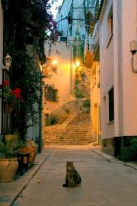 The Cat on the Side Street, Calella, Catalonia, Spain
