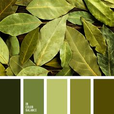 Green and brown color scheme dark green brown color color palette dark green and brown color . green and brown color scheme Nature Color Palette, Green Colour Palette, Color Palate, Green Colors, Colours, Design Seeds, Pantone Verde, Teal Color Schemes, Monochrome Color